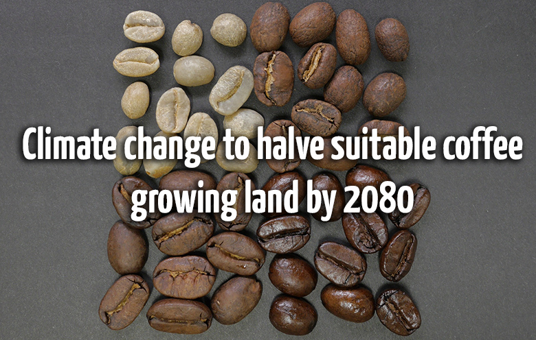 Climate change to halve suitable coffee growing land by 2080